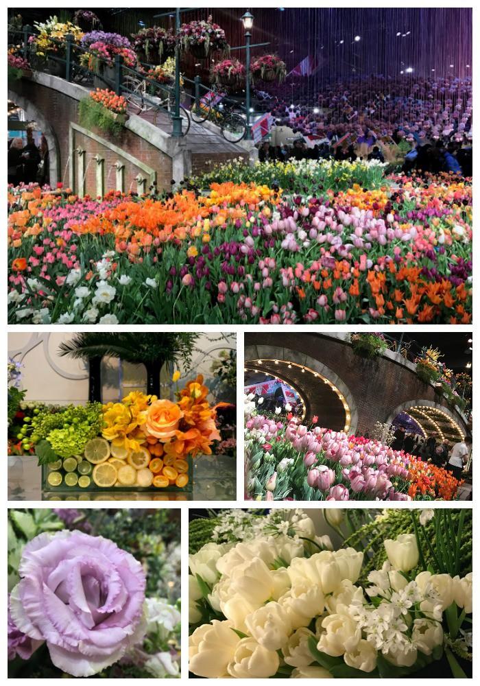 Flowers-Philadelphia Flower Show-Holland